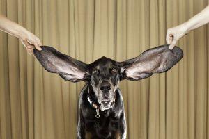 odos susirgimų ir ausų ligos